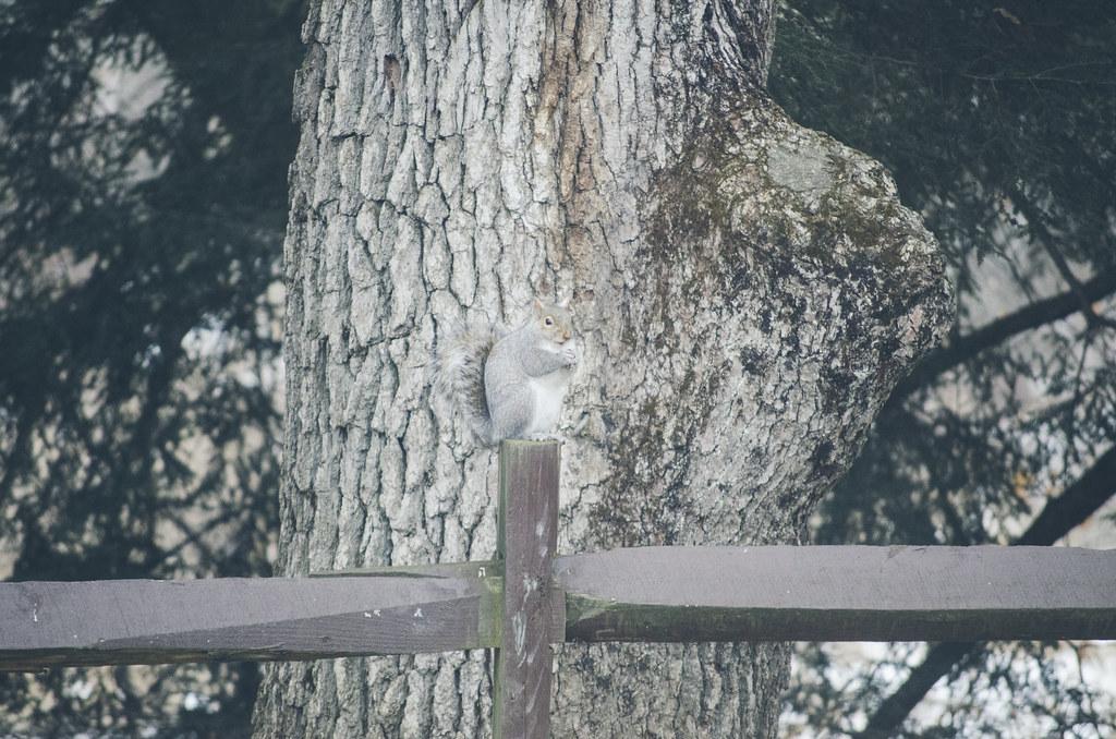 L'écureuil 2