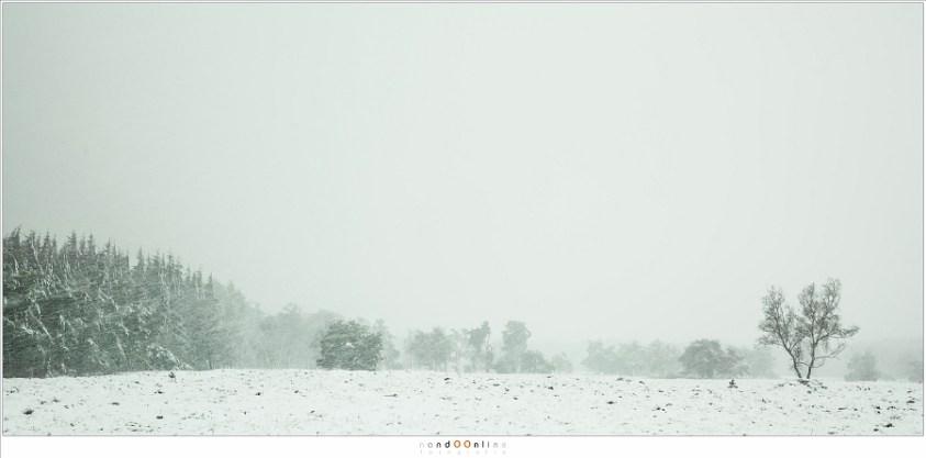 Een Sneeuwbui op de Stippelberg