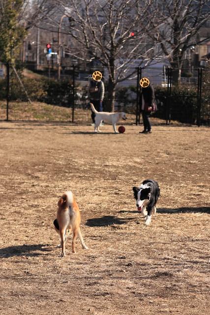01_14_dog_run_0014