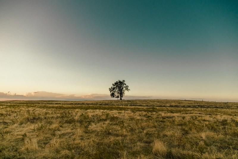 Roseville Tree
