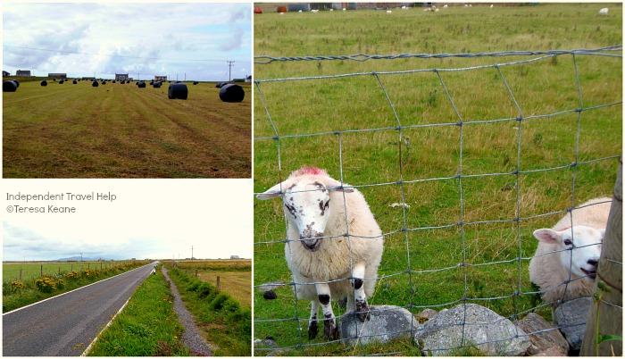 Nunton countryside