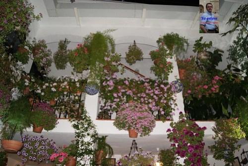 Explendor de flores en Patio de Córdoba