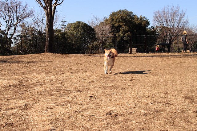 01_14_dog_run_0007