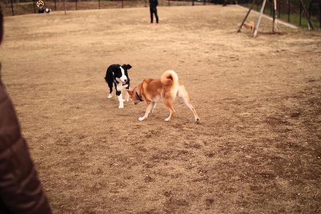 01_14_dog_run_0029