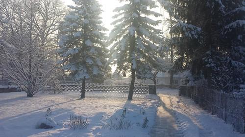 Winter... schon wieder (1/5)