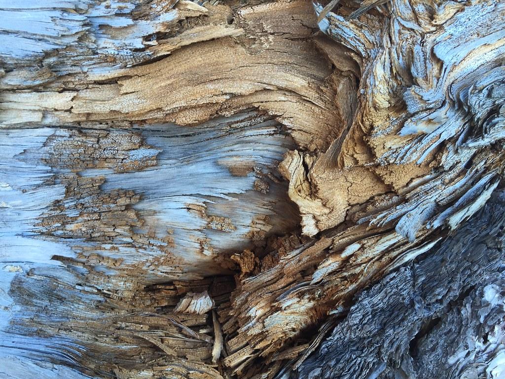 Imagen gratis de una corteza de árbol