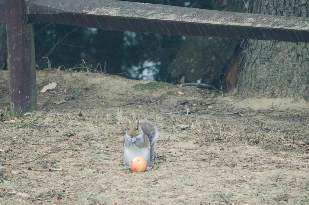 L'écureuil 3