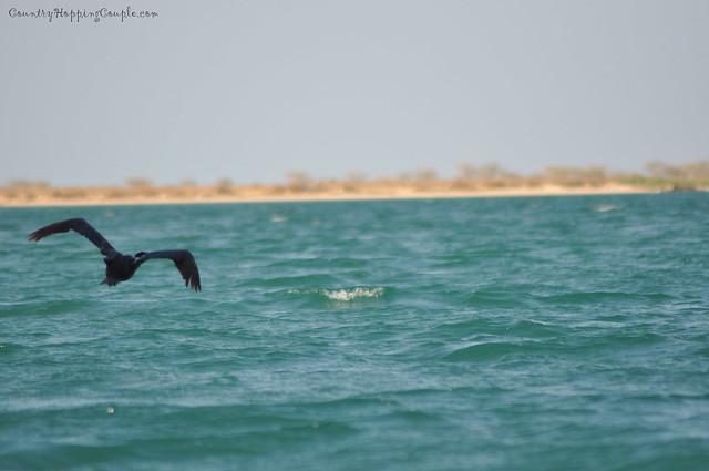 Bird Watching Um Al Quwain 6