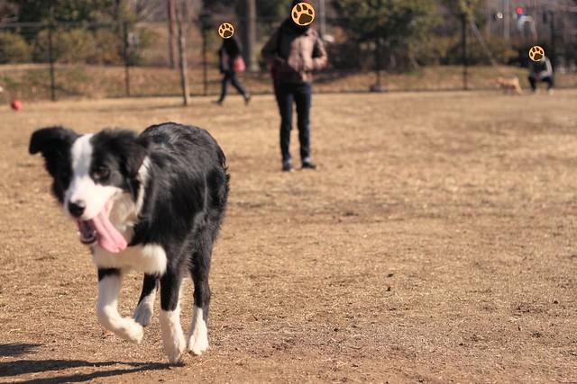 01_14_dog_run_0018