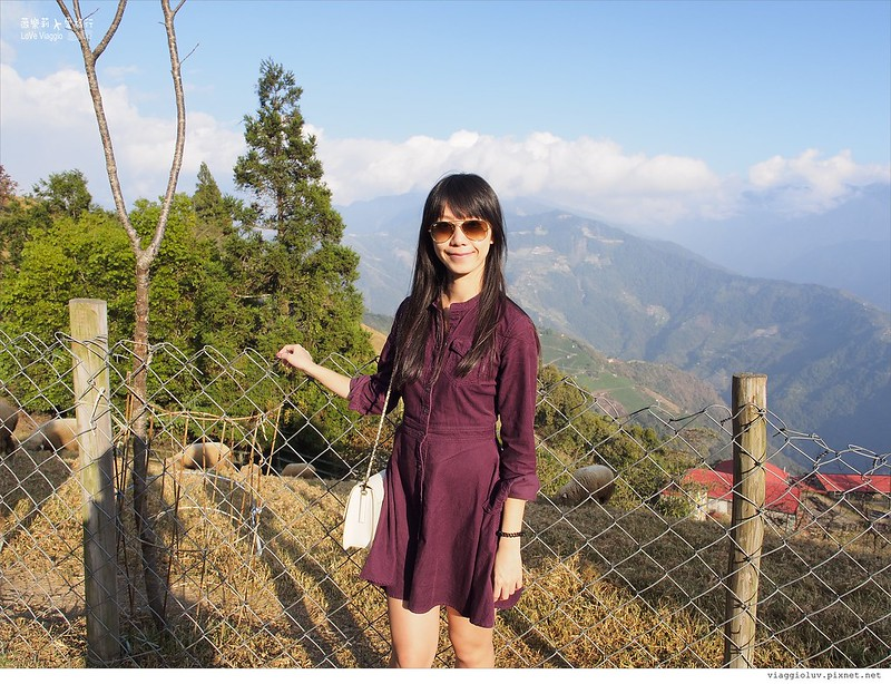 南投景點,合歡山,清境 @薇樂莉 Love Viaggio | 旅行.生活.攝影