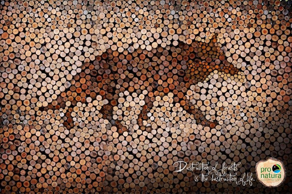 Pro-Natura - Wolf