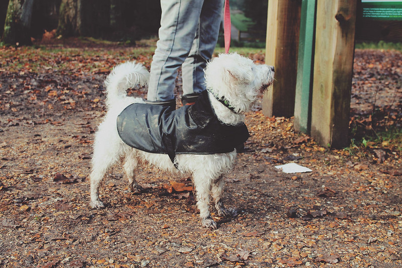 Doggy Barbour jacket