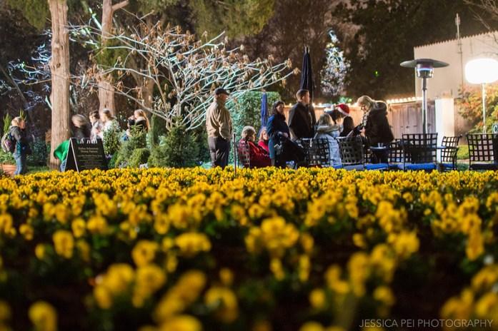 Yellow Flowers Dallas Arboretum