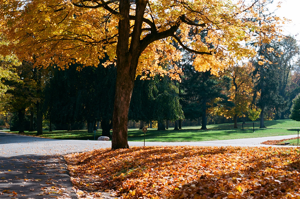 Cemetery shade