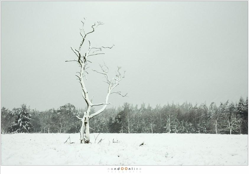 De ene eenzame boom