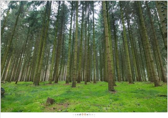 Een bos met 17mm gefotografeerd met de camera schuin naar boven gericht