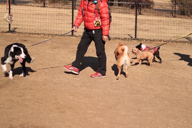 01_14_dog_run_0020