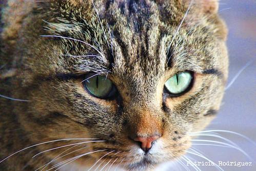 Cat #5