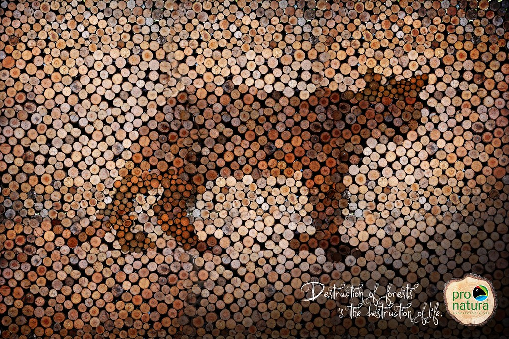 Pro-Natura - Jaguar