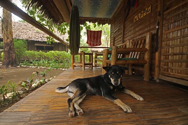 Driftwood Village Beach Resort