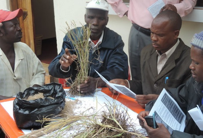 Farmers at the training examine various types of forage grass (Photo credit: IITA/Gloriana Ndibalema)