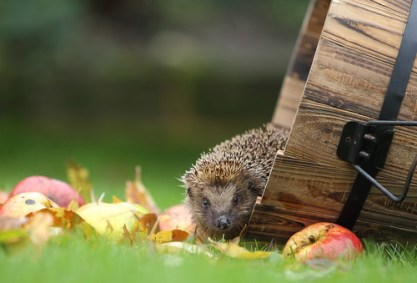 Hedgehog, Sacher Torte, Repeal Day, Day Of The Ninja