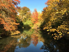 Central Park in mid autumn