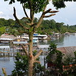 07 Viajefilos en Panama. Isla Bastimentos 12