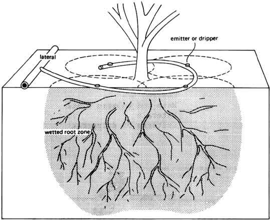 Tưới nhỏ giọt quanh gốc cây cho cầ hồ tiêu, cây ăn trái....