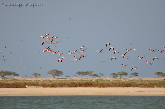 Flamingo Um Al Quwain