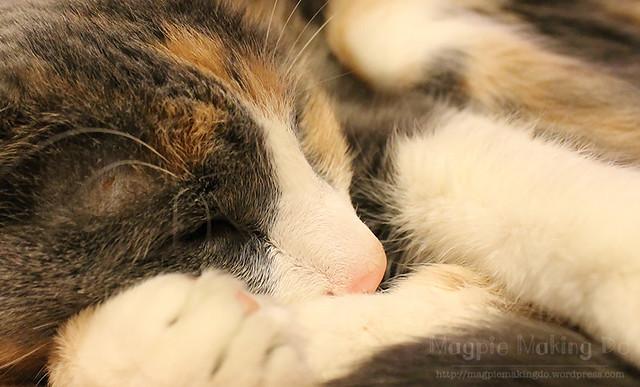 pink kitten noses