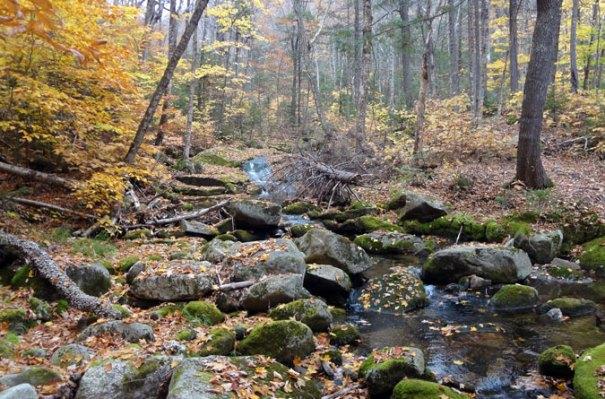 Grafton Loop Brook