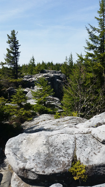 20160508_Dolly Sods_026
