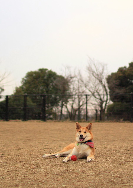 01_14_dog_run_0039