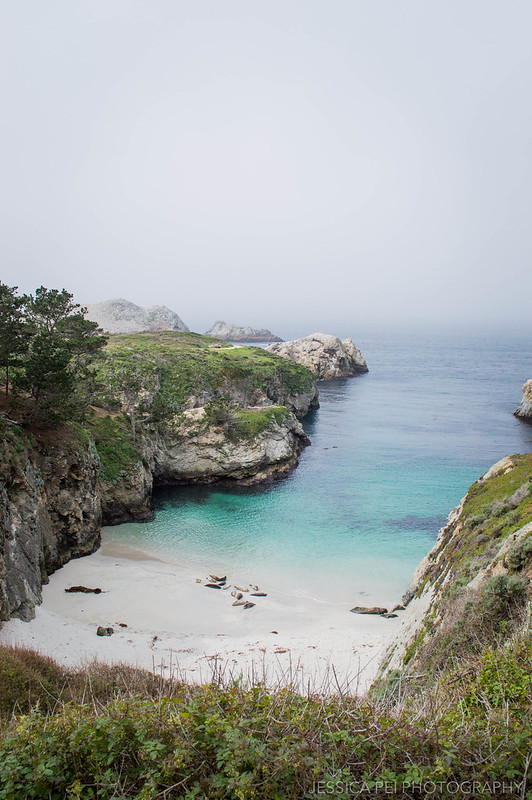China Cove Seals Point Lobos State Natural Reserve California