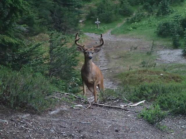 Buck In Camp