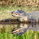 Discovering the Wilds of Tampa Bay Florida