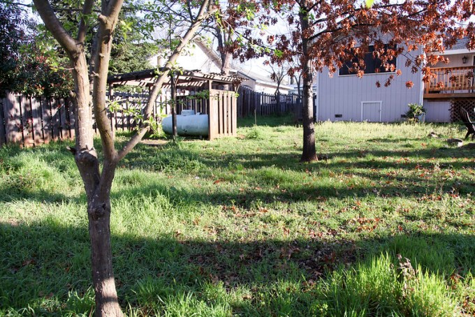Backyard - Before