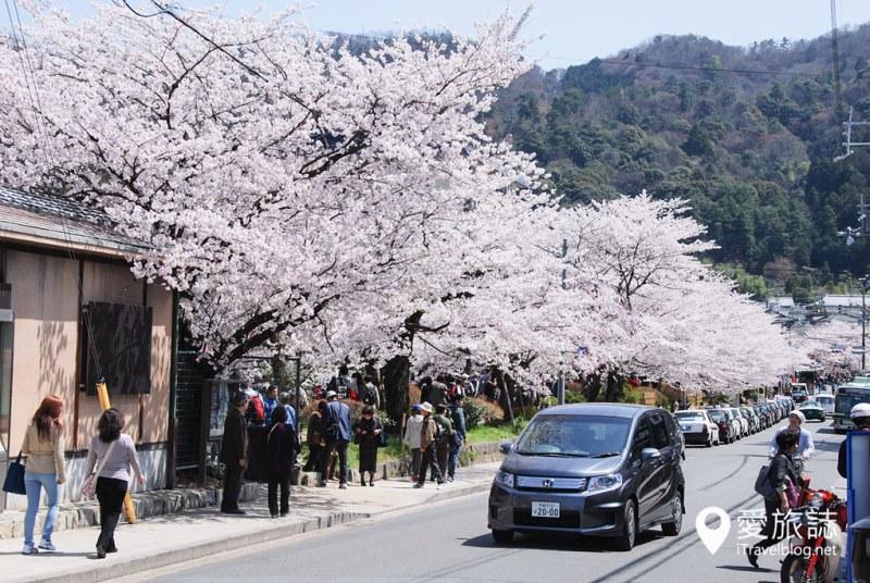 京都赏樱景点 哲学之道 28