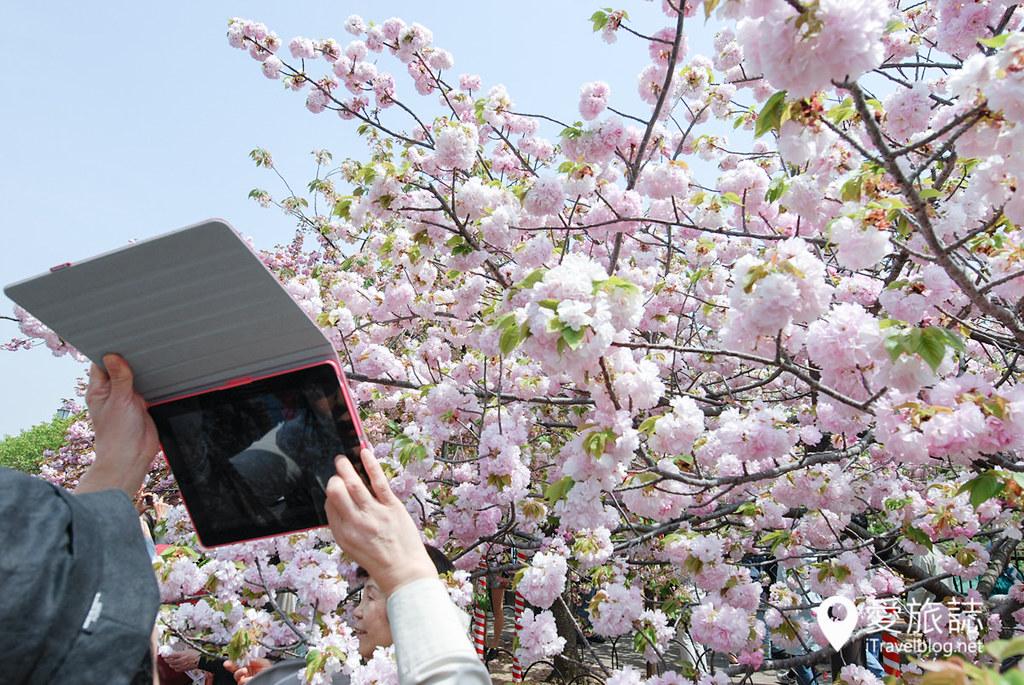 大阪造币局 樱花 23
