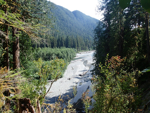 North Fork Of The Quinault River
