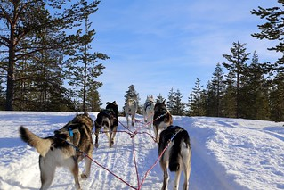 6 husky power, up the hill
