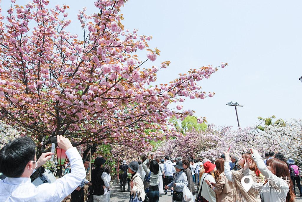 大阪造币局 樱花 21