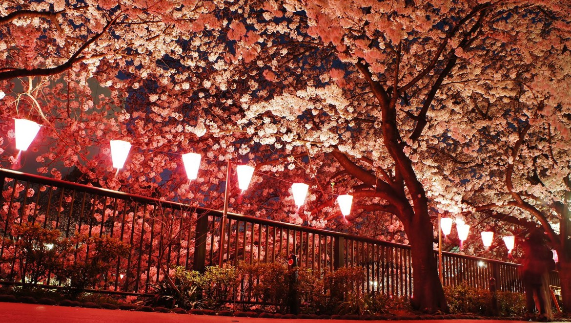 Pink lanterns at the Meguro River Sakura illumination