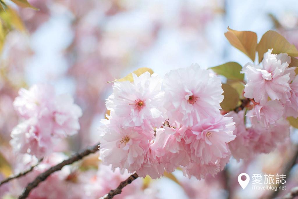 大阪造币局 樱花 40