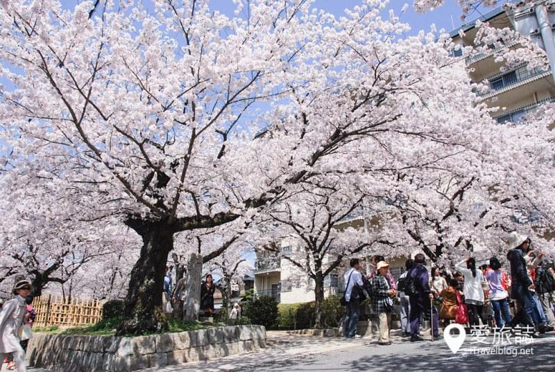 京都赏樱景点 哲学之道 09