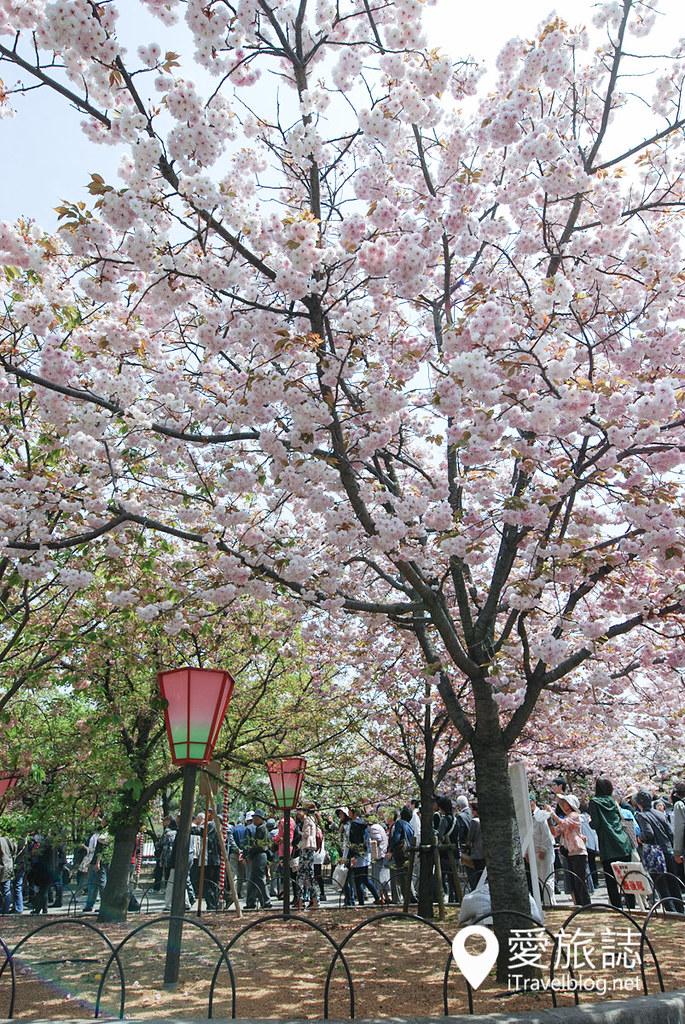 大阪造币局 樱花 32