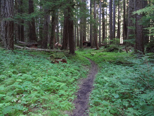 Elwha River Trail