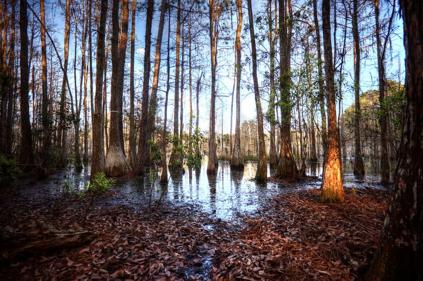 The sun setting in the swamp at Starkey Wilderness Park.