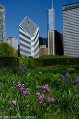 Chicago2016: Millenium Park Garden